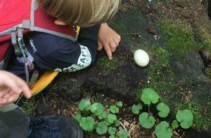 Ein Ei untersuchen