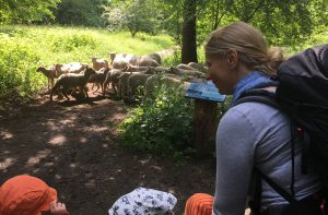 Sophia und die Schafe