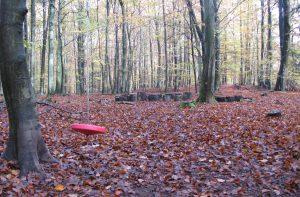Schaukel im Wald